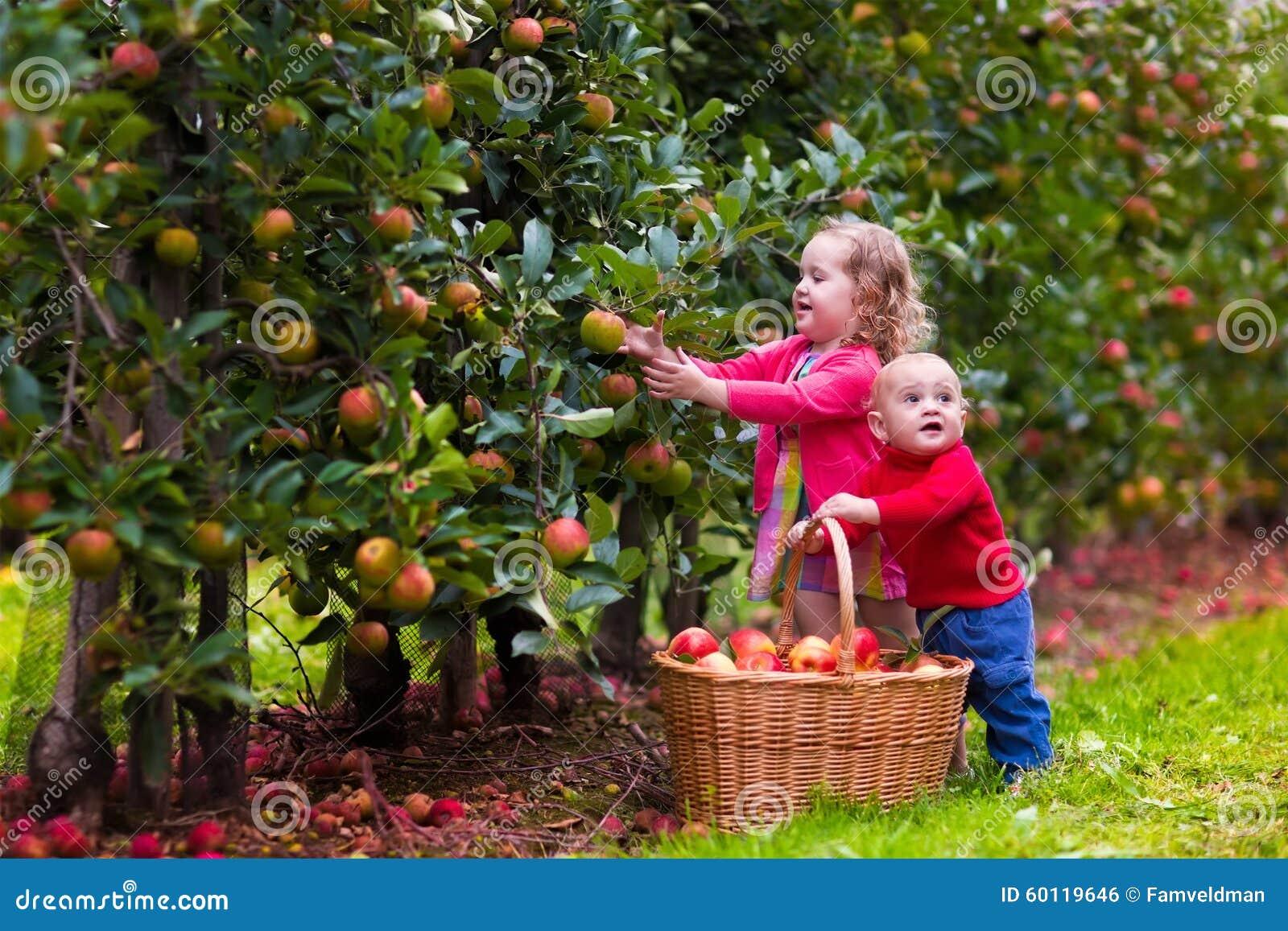 Kinder, die Äpfel vom Baum auswählen