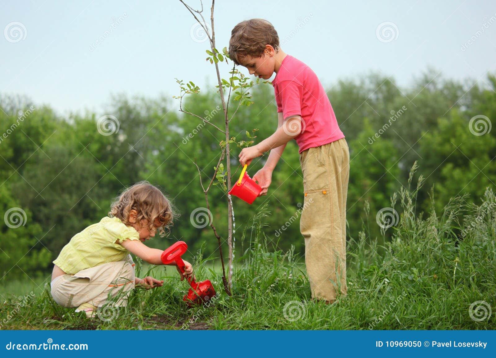 Kinder pflanzen den Baum