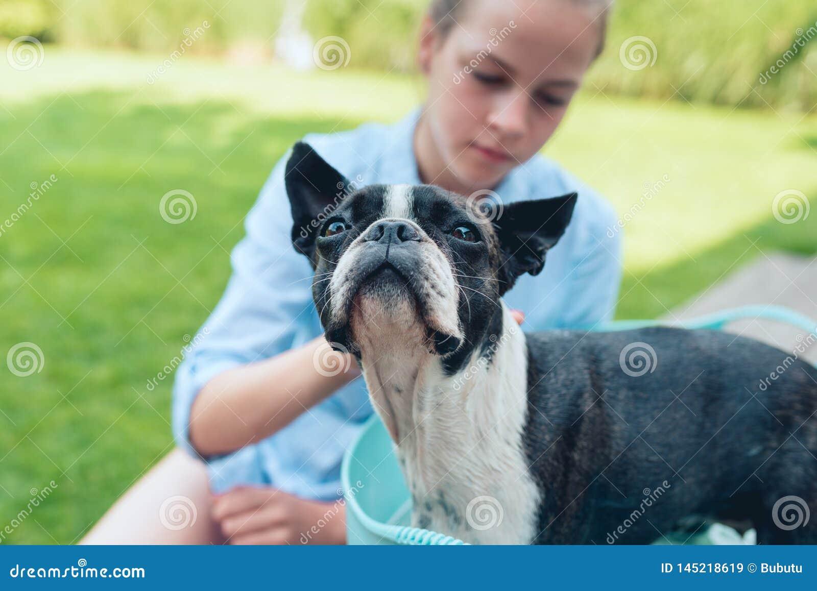 Kinder waschen Boston-Terrierwelpen im blauen Becken im Sommergarten