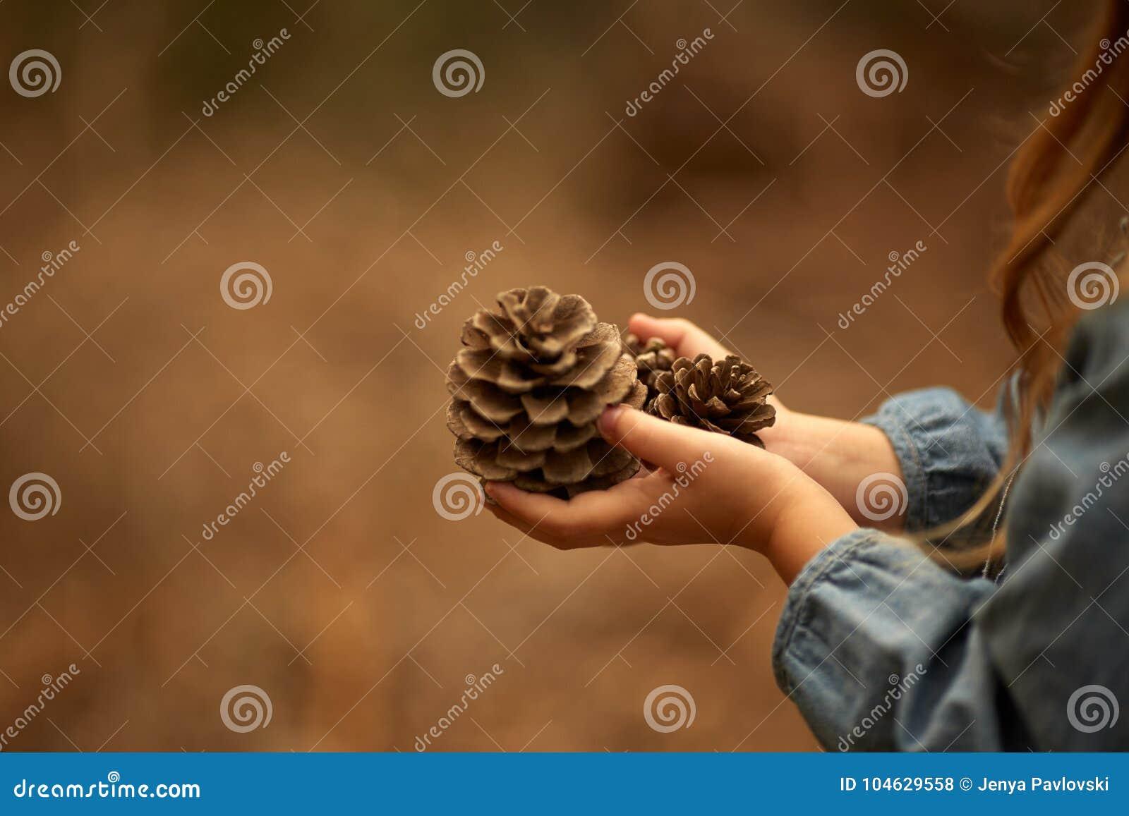 Download Kinderen` S Handen, Denneappel, Close-up Stock Foto - Afbeelding bestaande uit voorwerp, droog: 104629558