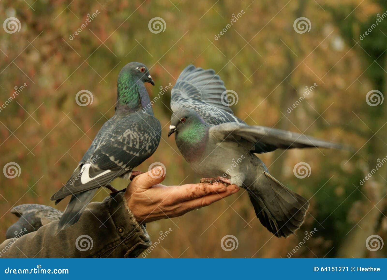 Kindly feeding pigeons