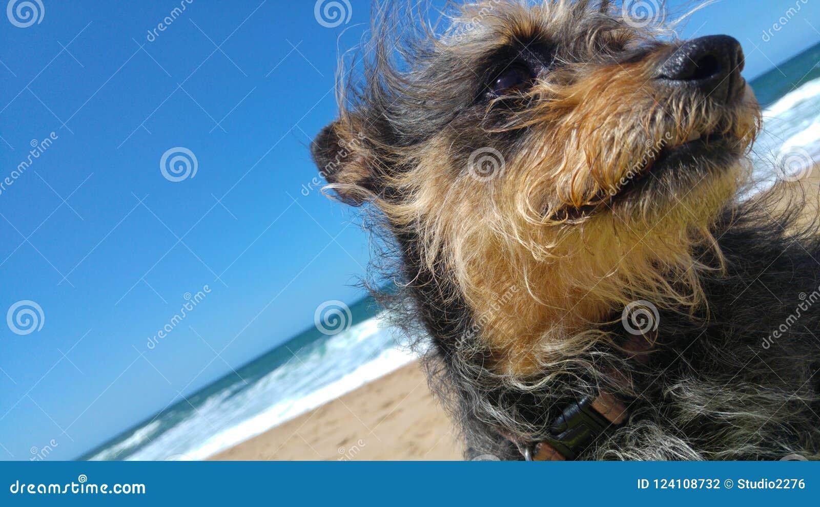 Kines krönat hundslut upp på stranden