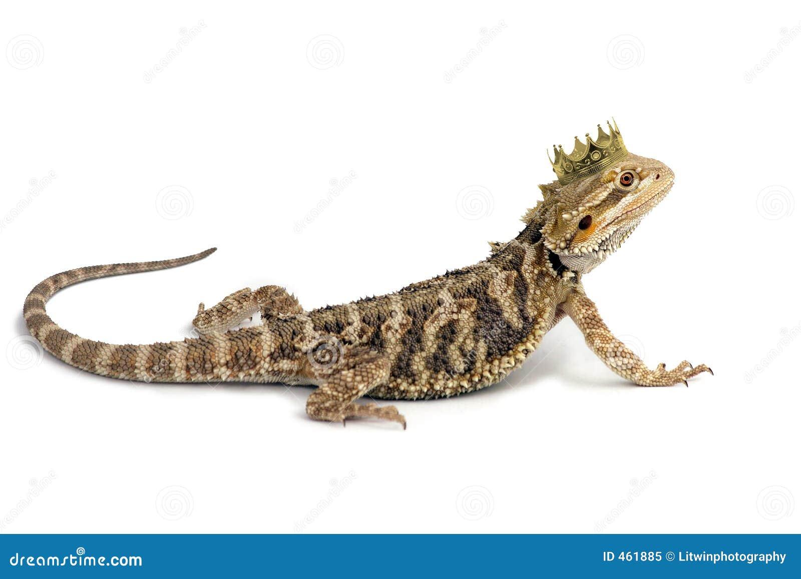 King Drake The Bearded Dragon Stock Image Image Of Import Eyes 461885