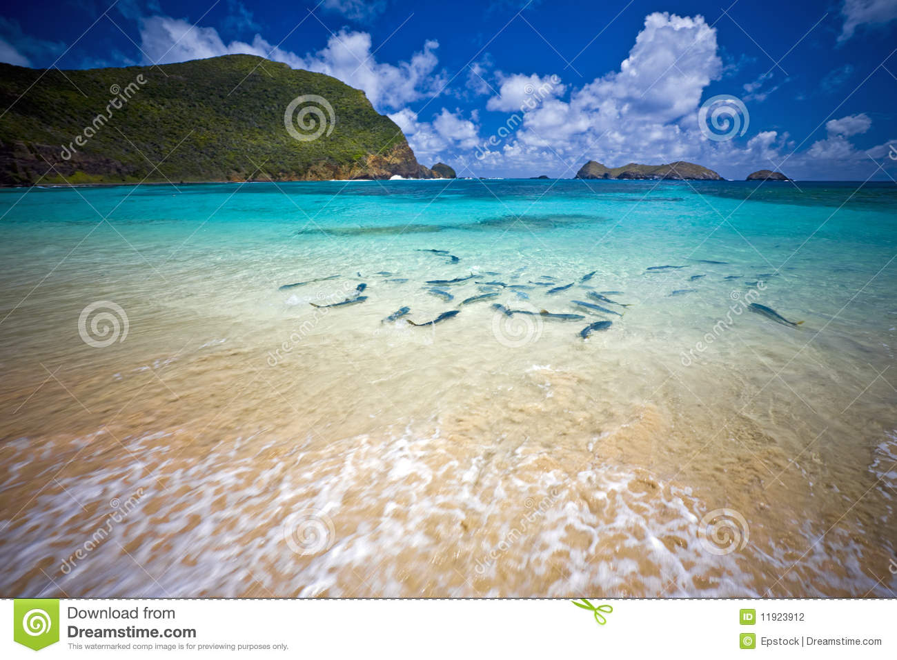 King fish at the beach lord howe island australia stock for How to fish from the beach