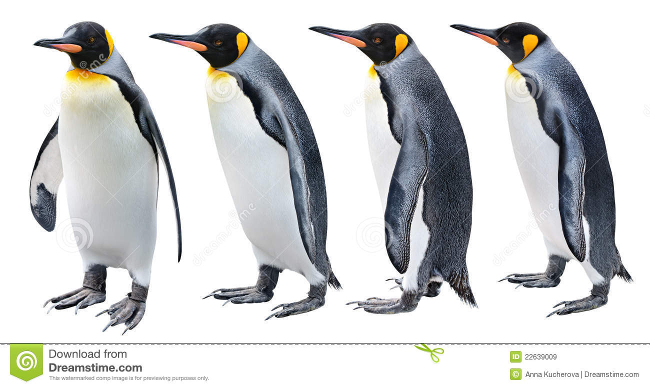 King Penguin Royalty Free Stock Images Image 22639009