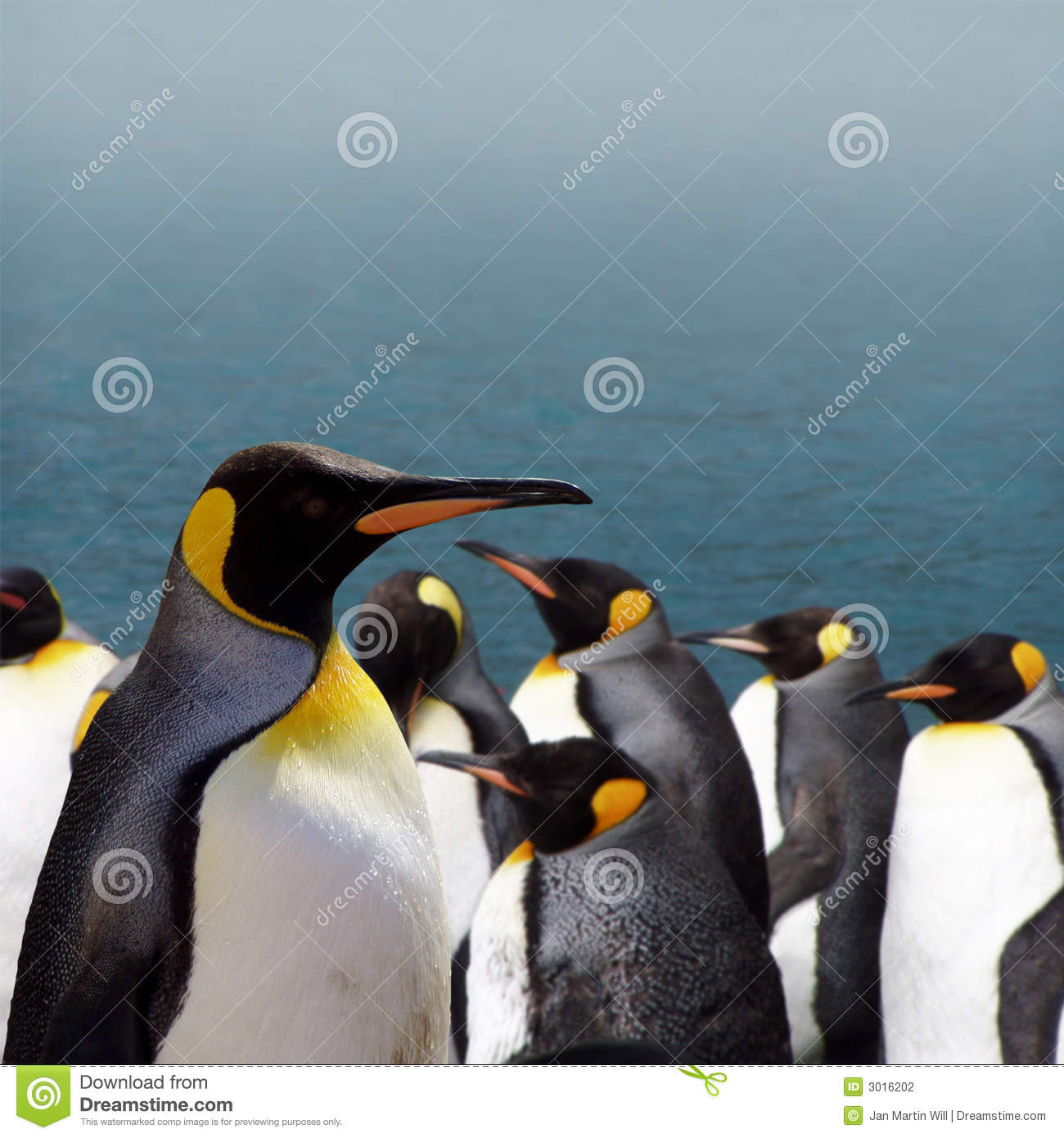The King of the Penguins