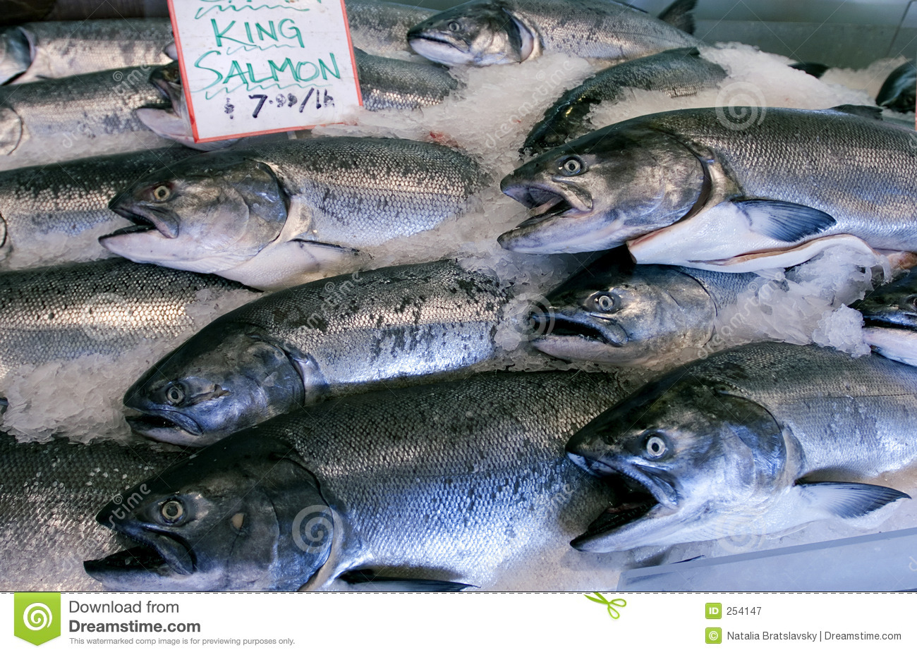 King salmon stock image image of grocer frozen morning for Fishing kings free