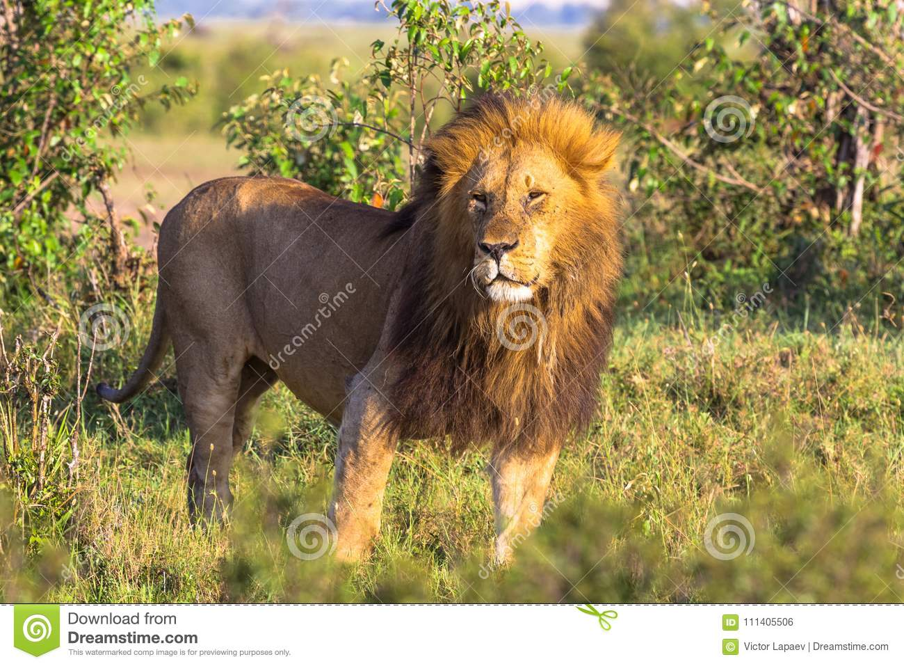 king of nature