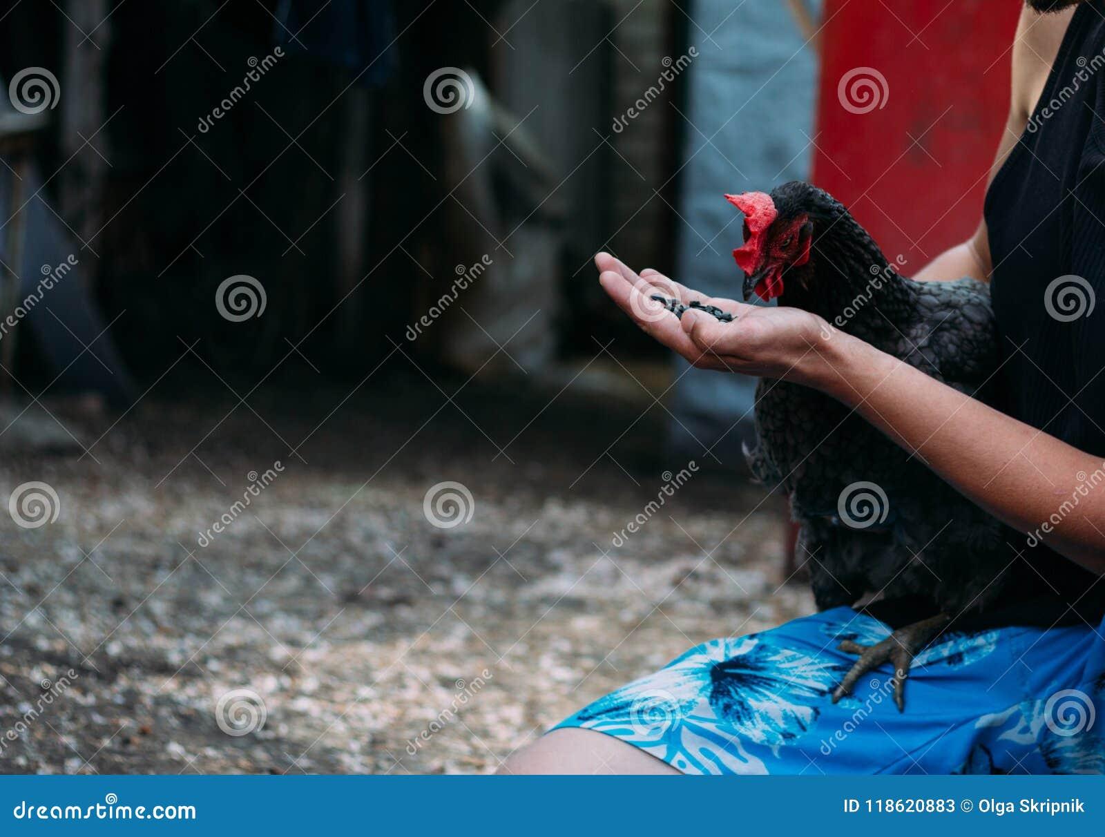 Kip het voeden E