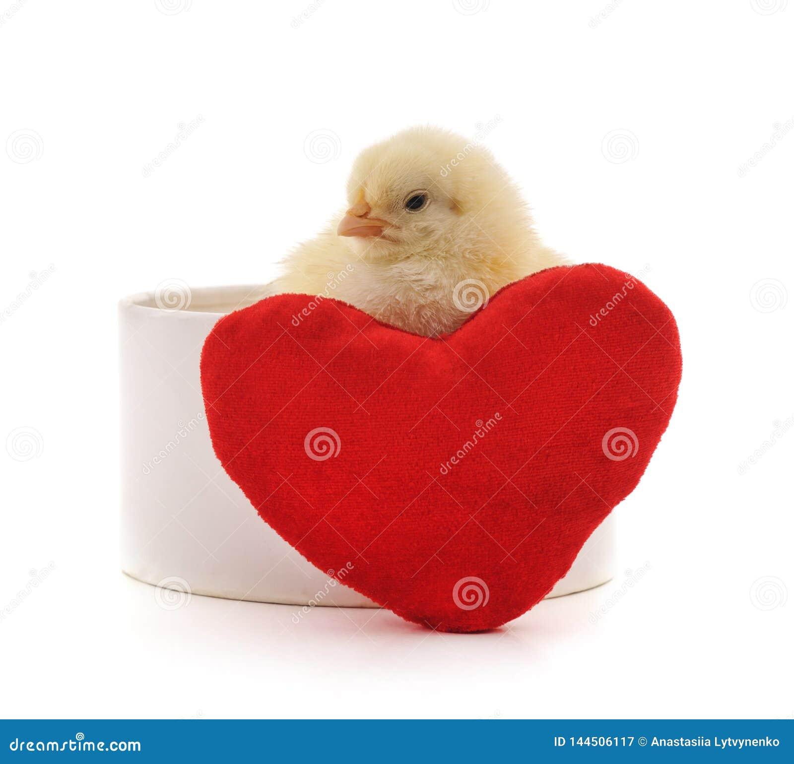Kip met hart