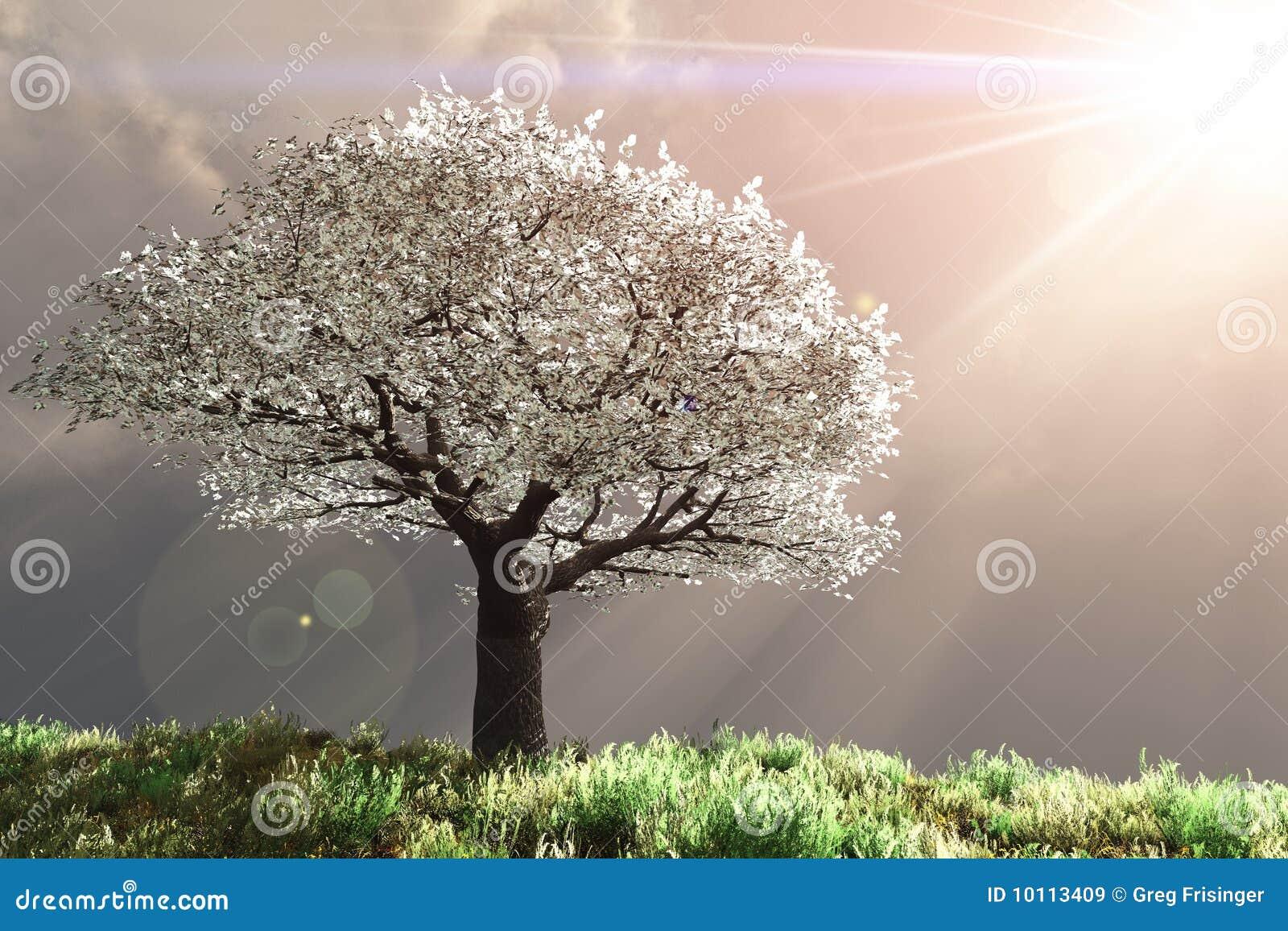 Kirschbaum mit Gottstrahlen
