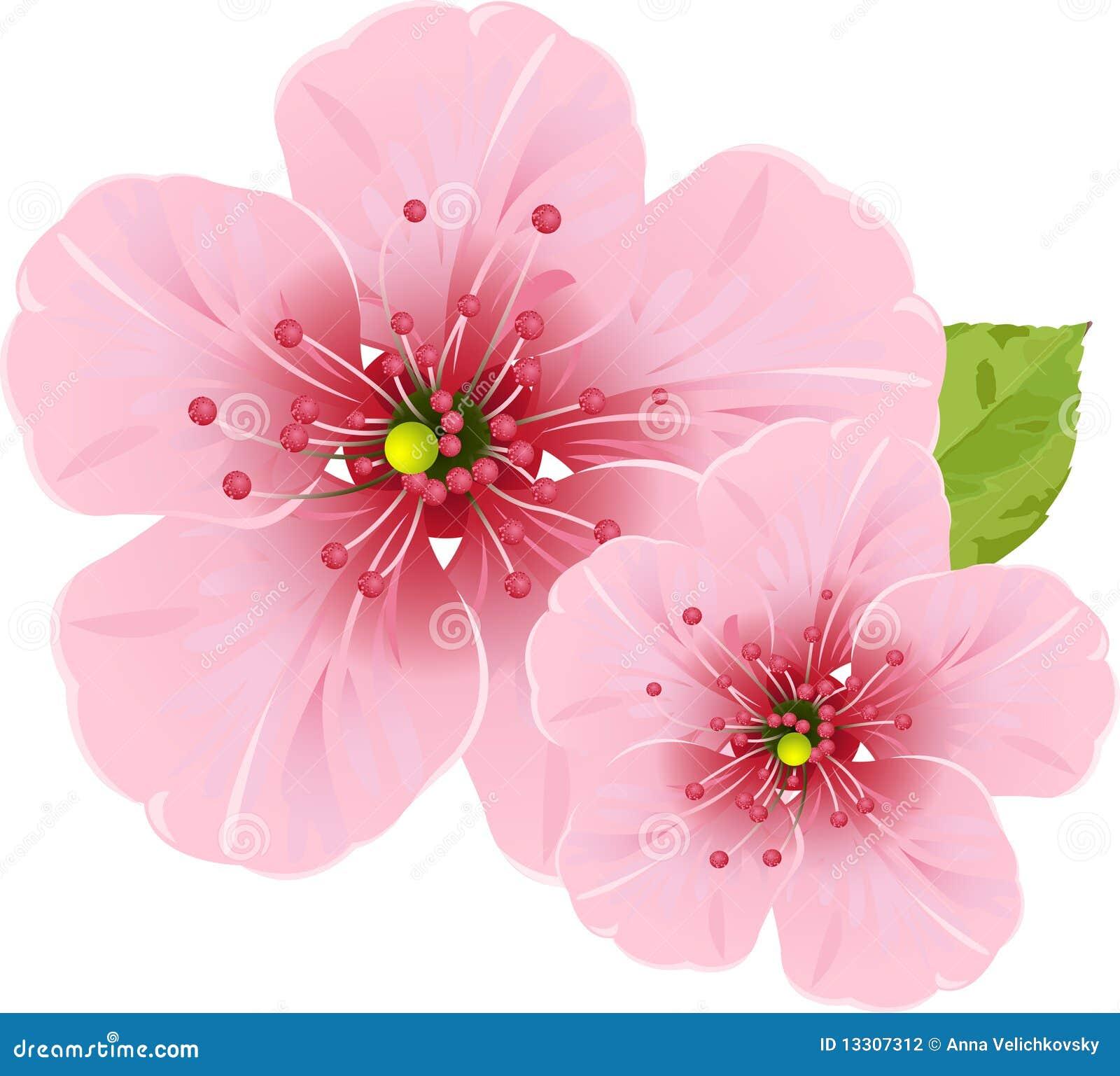 Kirschblütenblumen