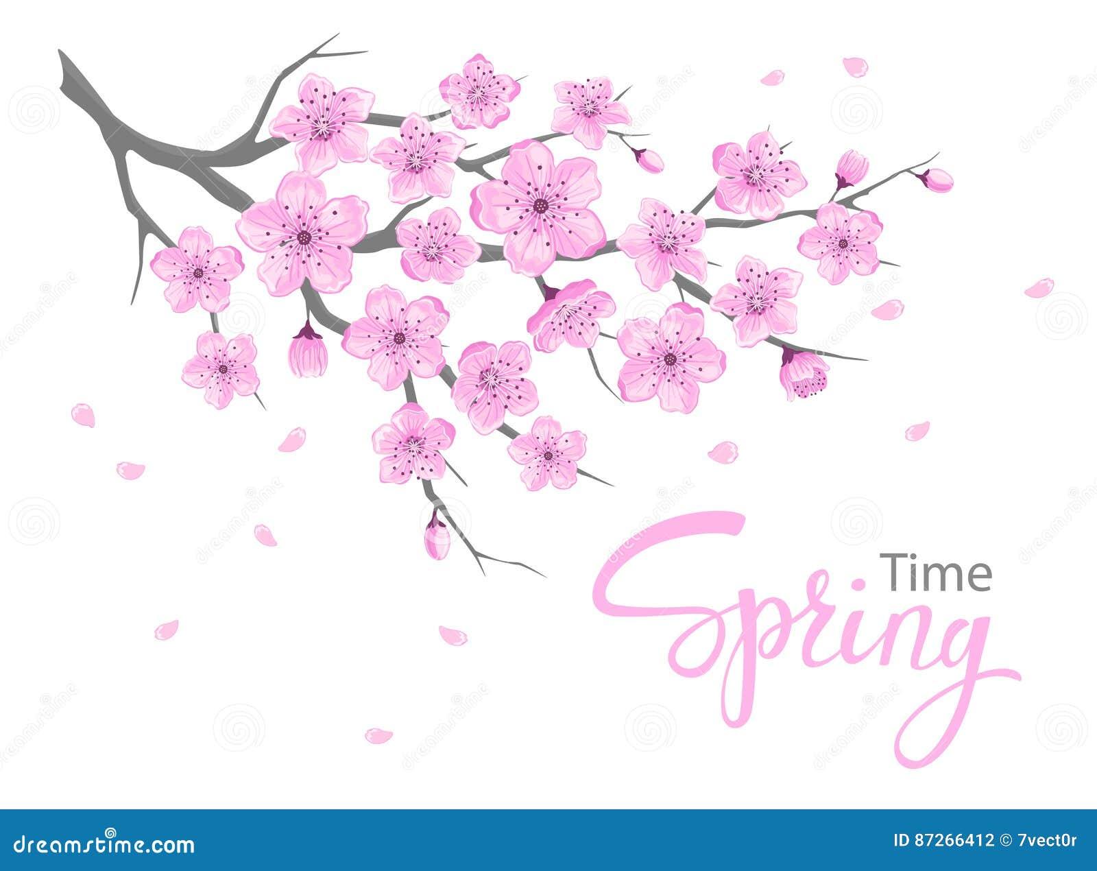 Kirschblütenfrühling blüht die lokalisierte Niederlassung