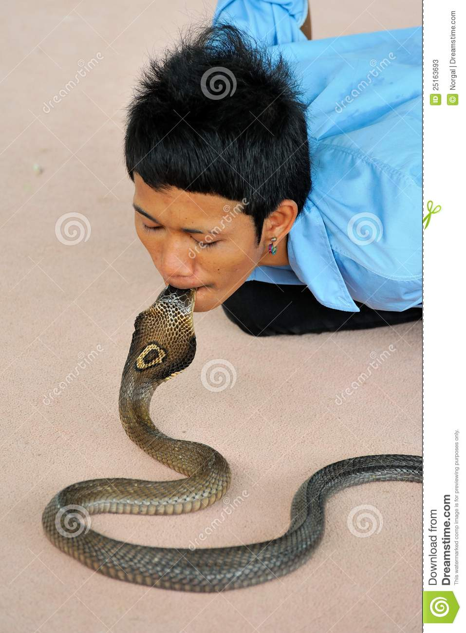 Kissing Cobra Editorial Stock Photo Image Of Tooth Snake 25163693