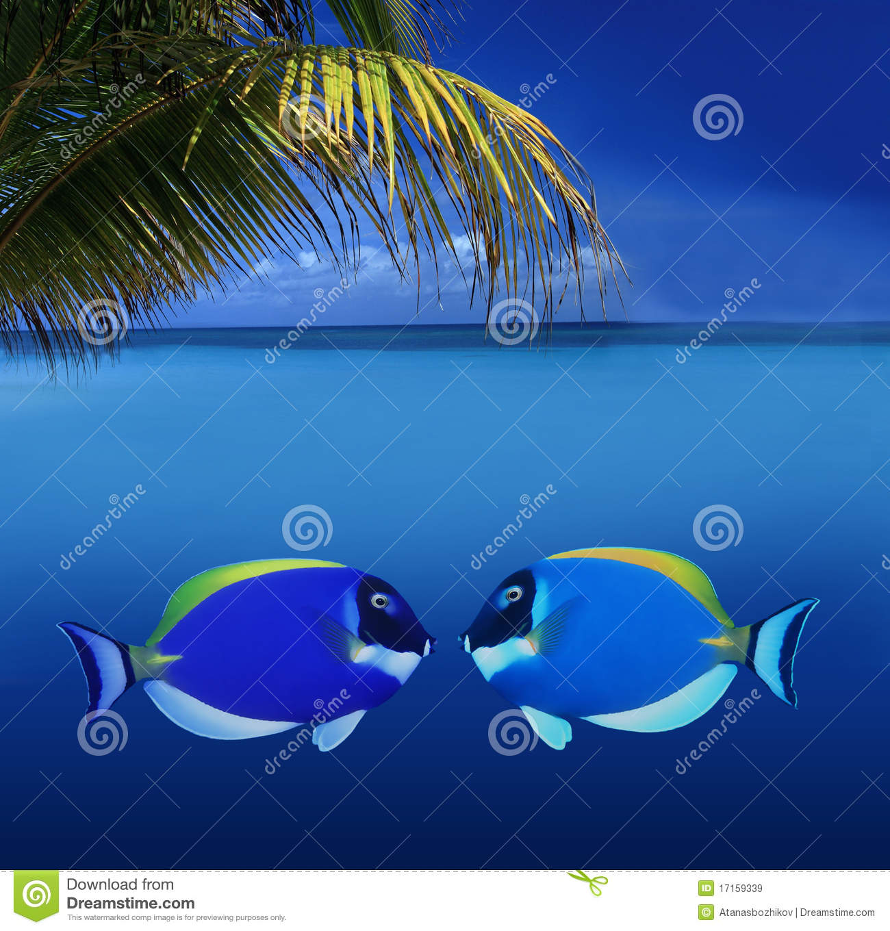 Kissing Colorful Fishes