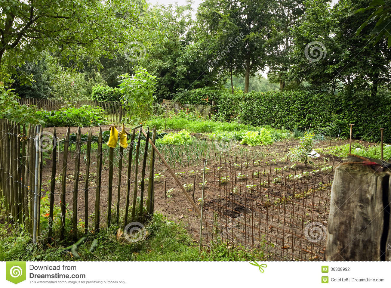 Kitchen garden in the country stock photography image for Kitchen garden fence