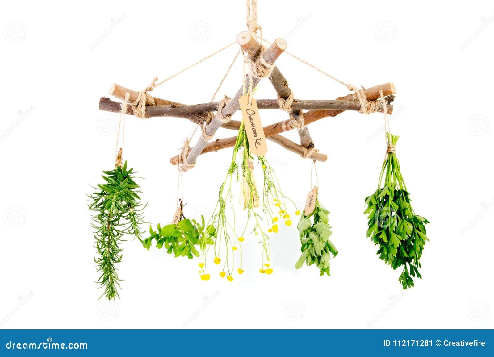 Kitchen - Herbal Witch Branch Pentagram Herb Dryer With Witches ...