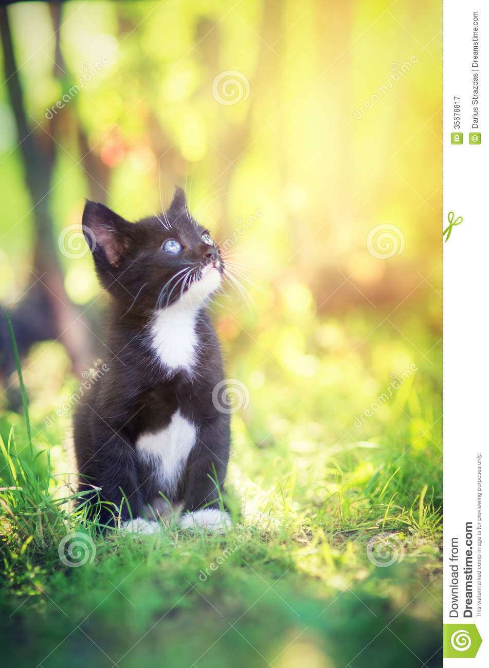 kitten bathed in sunlight royalty free stock photography