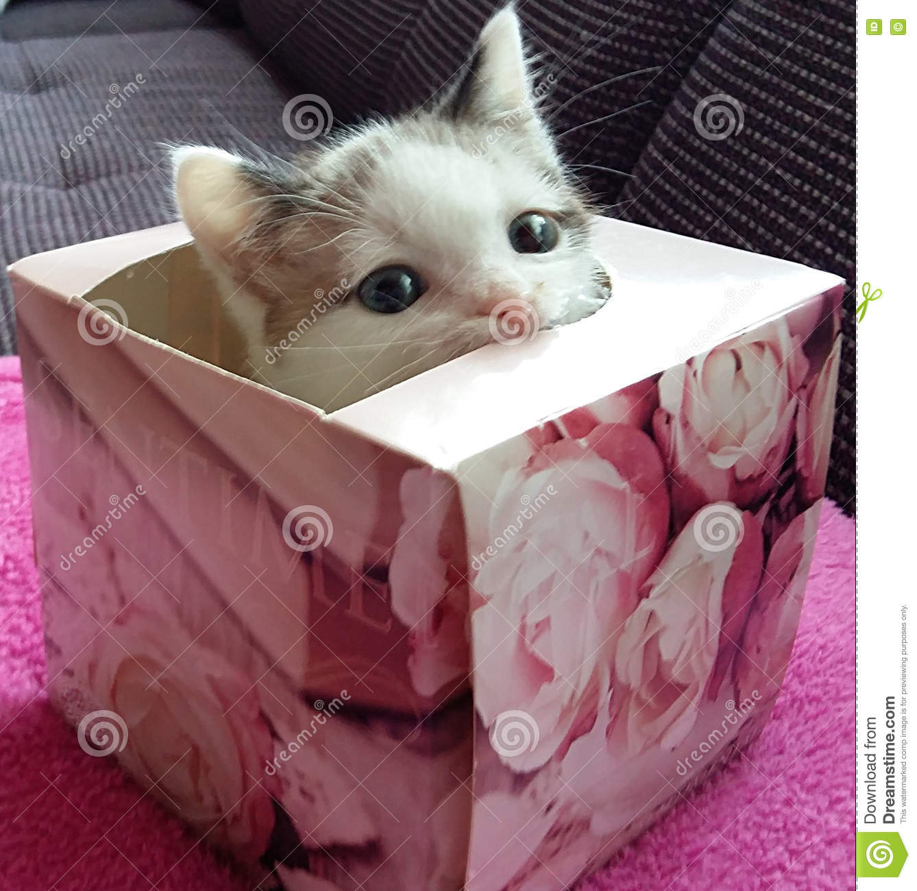 KITTEN IN THE BOX