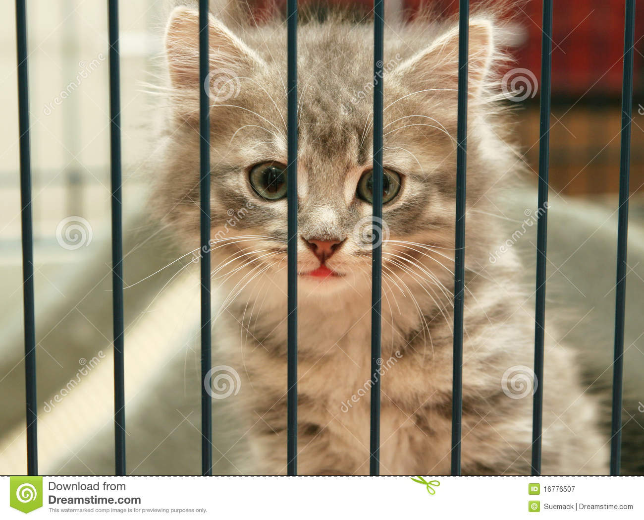 Pet Rescue Dogs Behind Bars