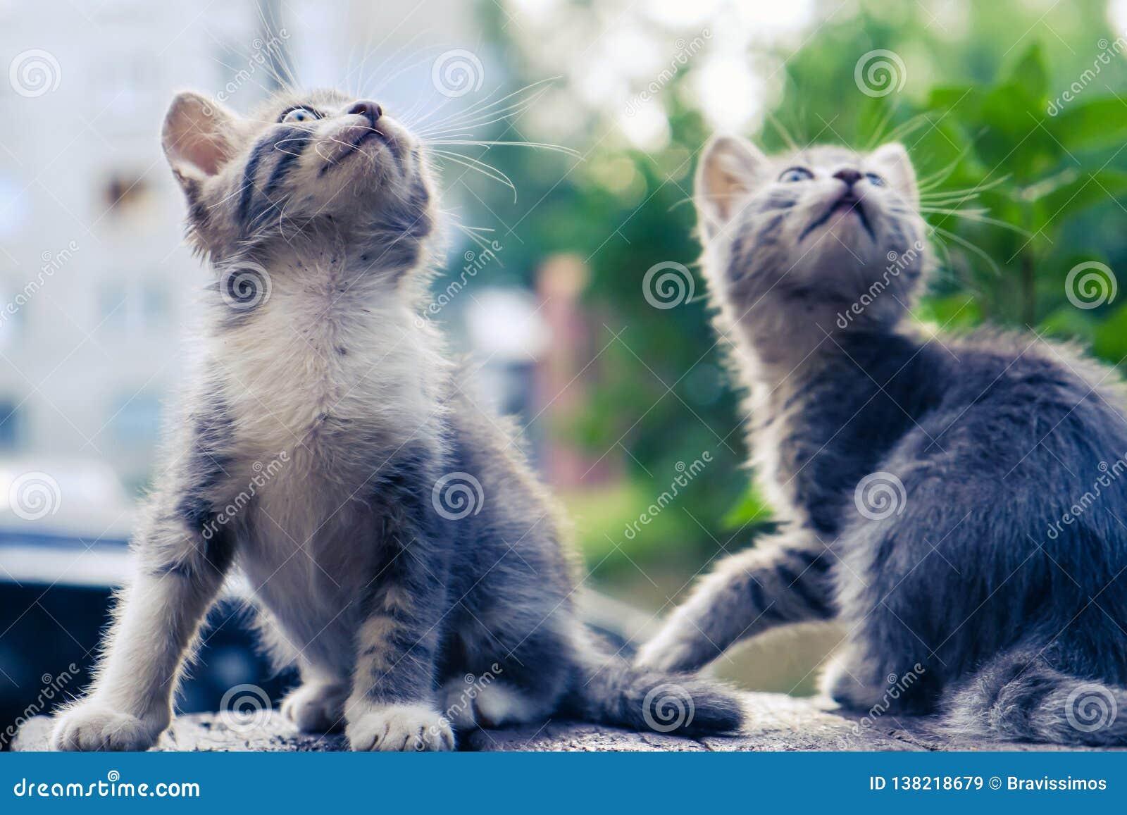 Kitten Cat Stray Cute Pet Alone Beautiful Stock Image Image Of Mammal Alone 138218679