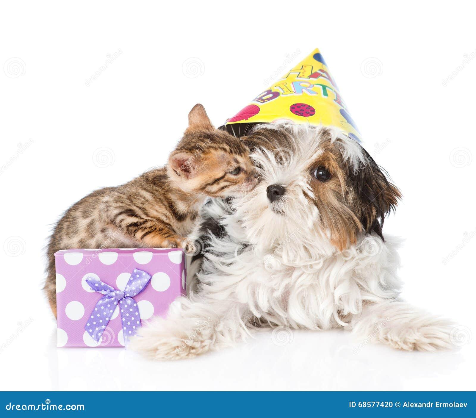 Kitten Congratulates Puppy Happy Birthday Isolated