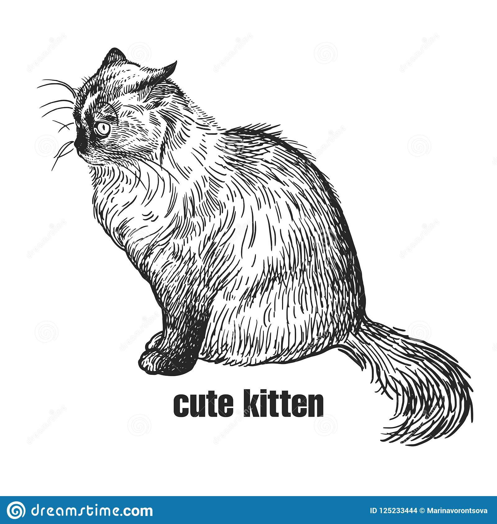 kitten cute pet hand made black and white drawing of siamese c