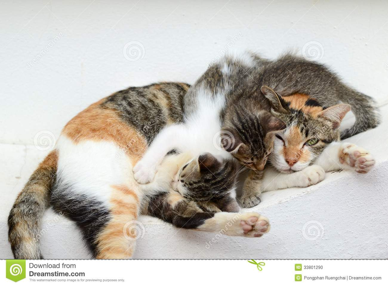Kittens Drinking Milk From Another Cat