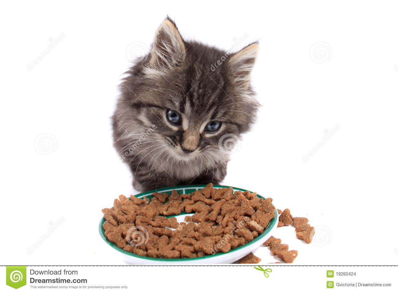 Whiskers Pet Food