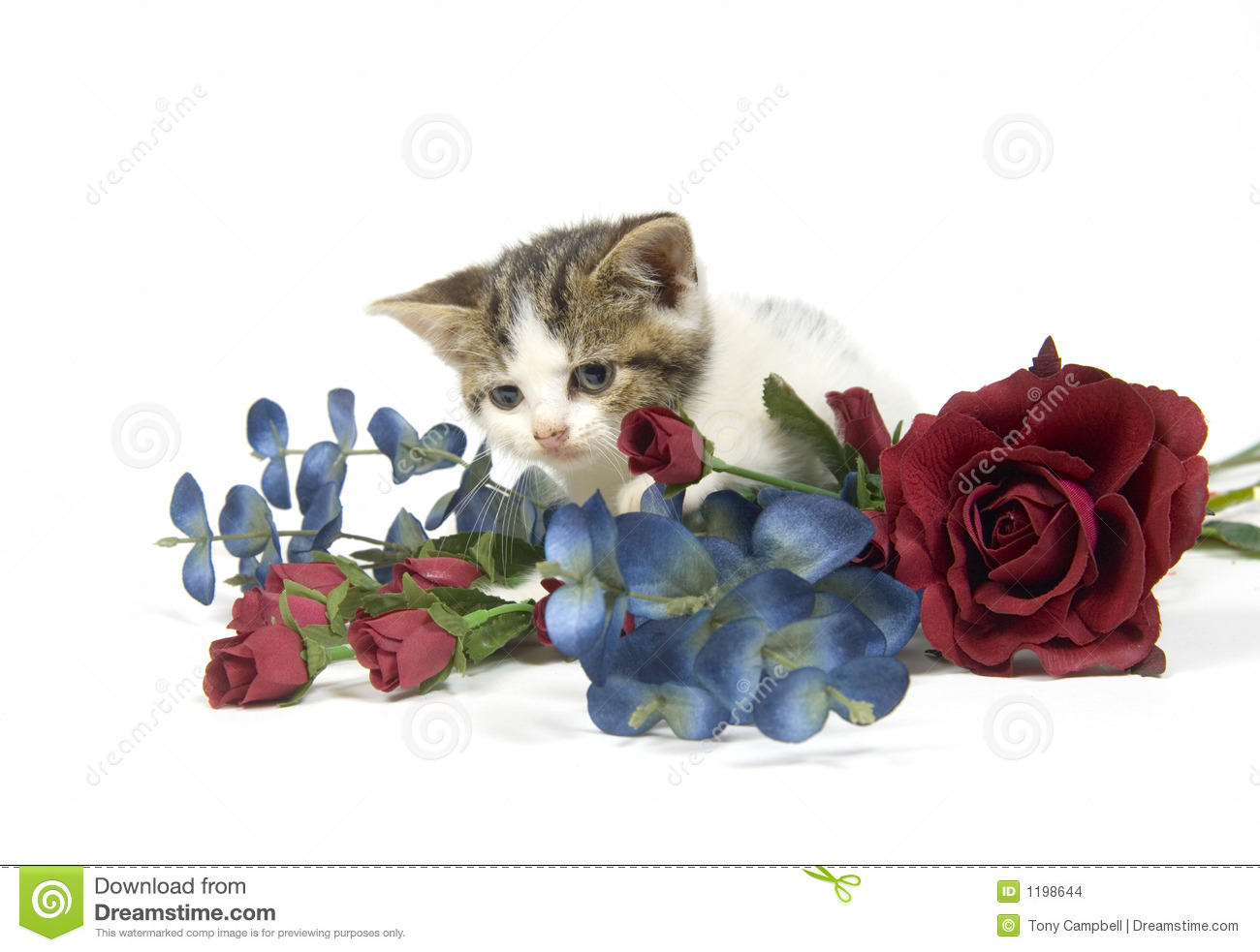 Kitten and flower stock photo. Image of youth, cuddly - 1198644
