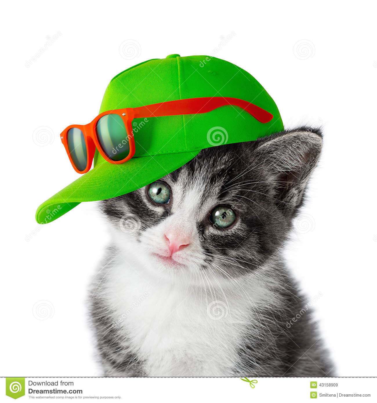 Kitten With Green Cap Stock Photo - Image: 43158909 Gray And White Cat With Green Eyes