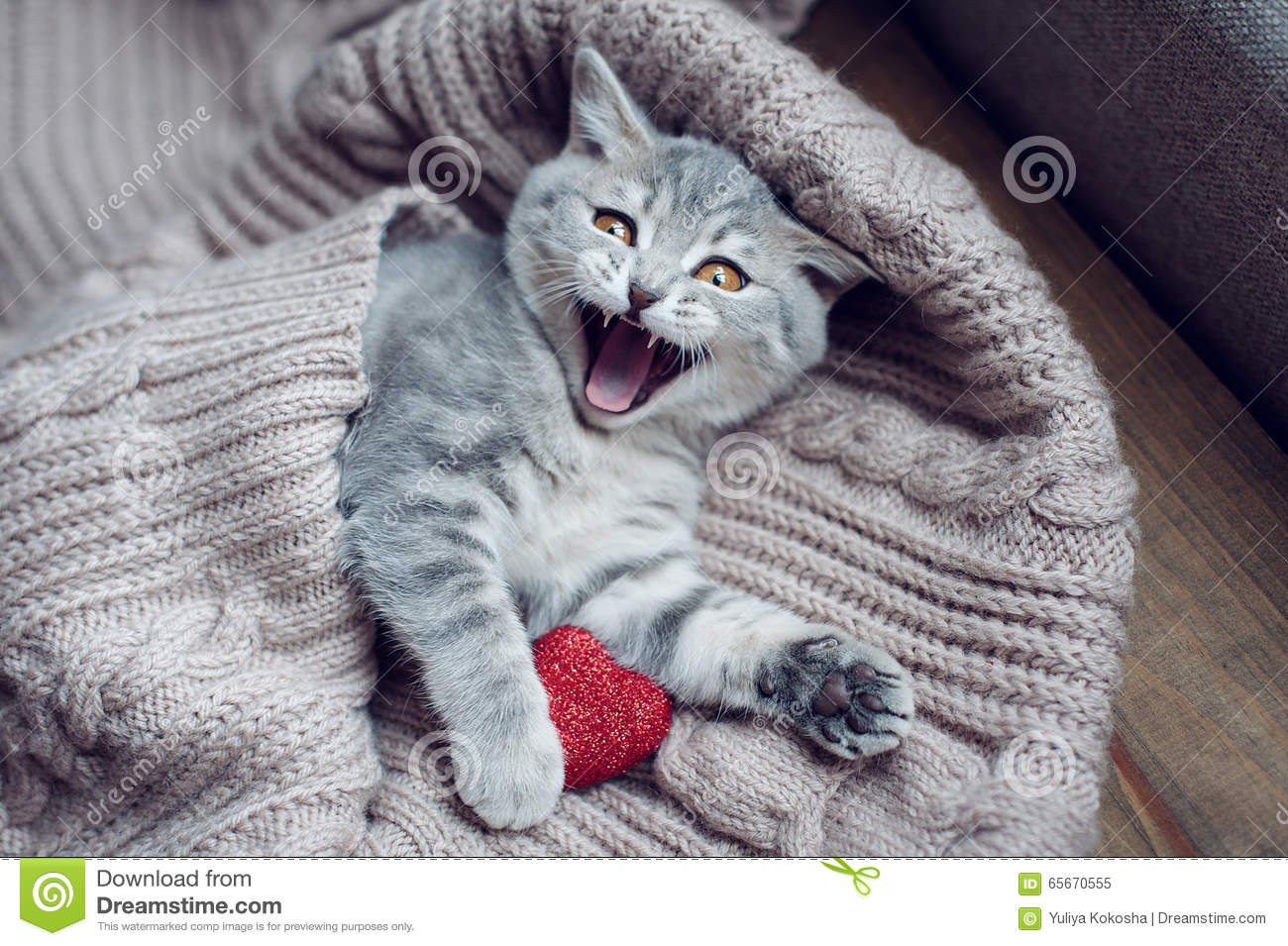Kitten With Heart In On Valentine S Day Stock Image Image Of Shape