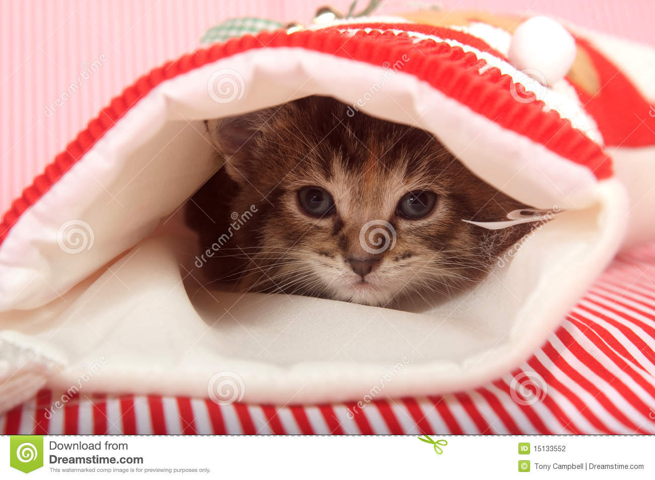 Kitten hiding in Christmas stocking