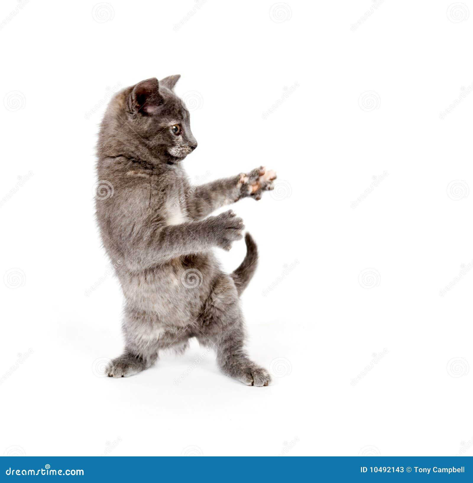 Jumping Cat Gif Cute
