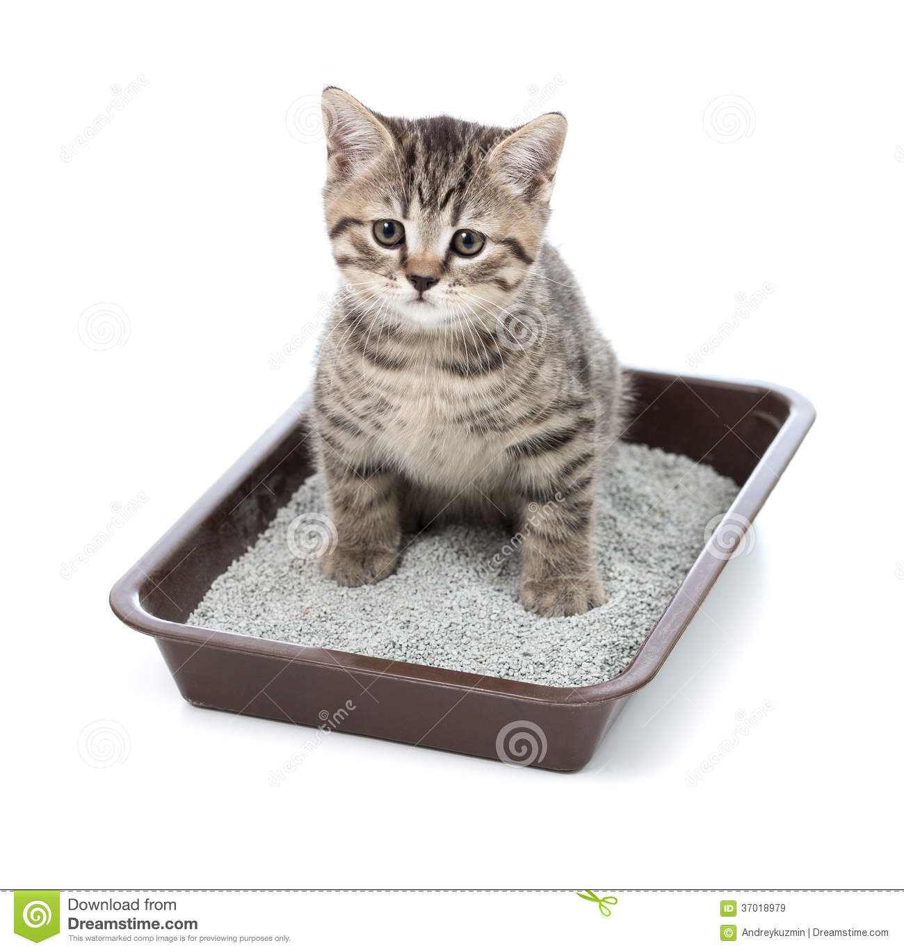 Litter Box For Cat Cage