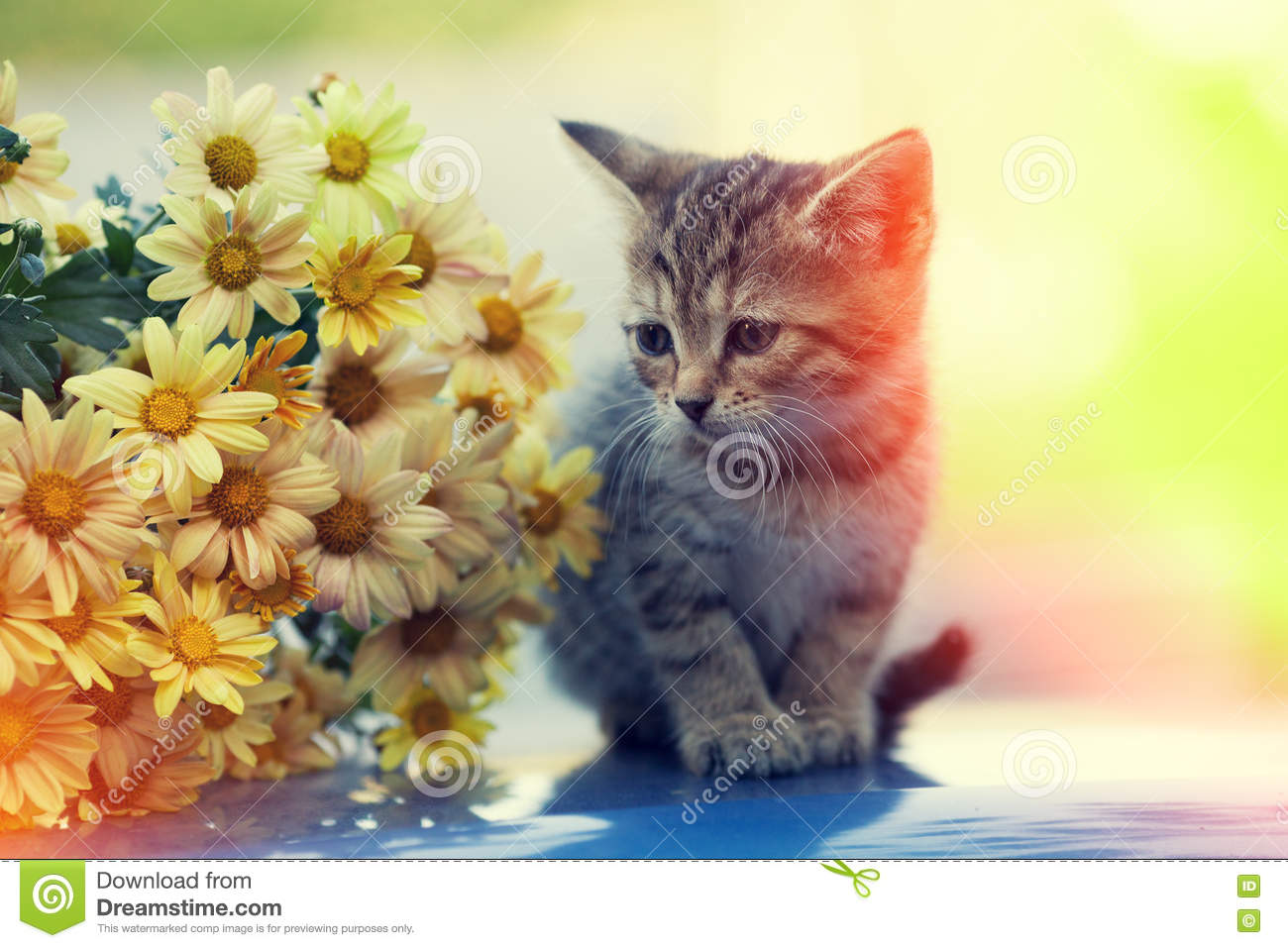 Kitten Looking At Bouquet Of Daisy Flowers Stock Photo - Image of ...