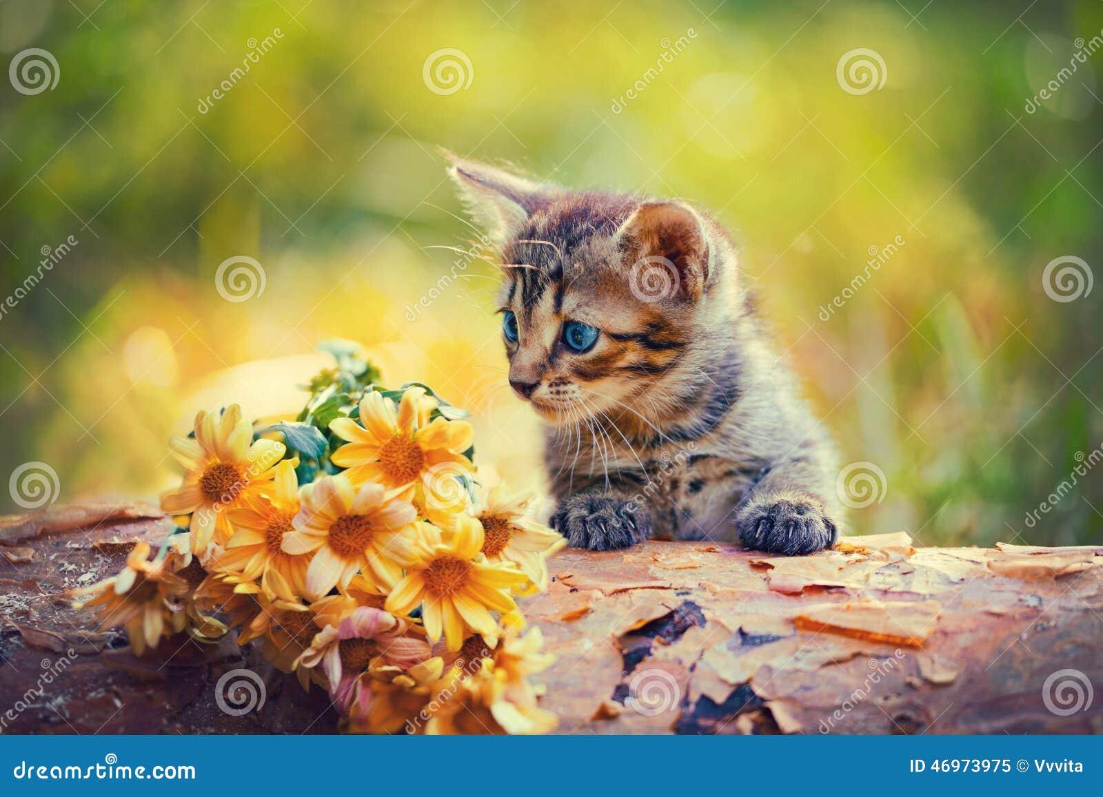 Kitten looking at flowers