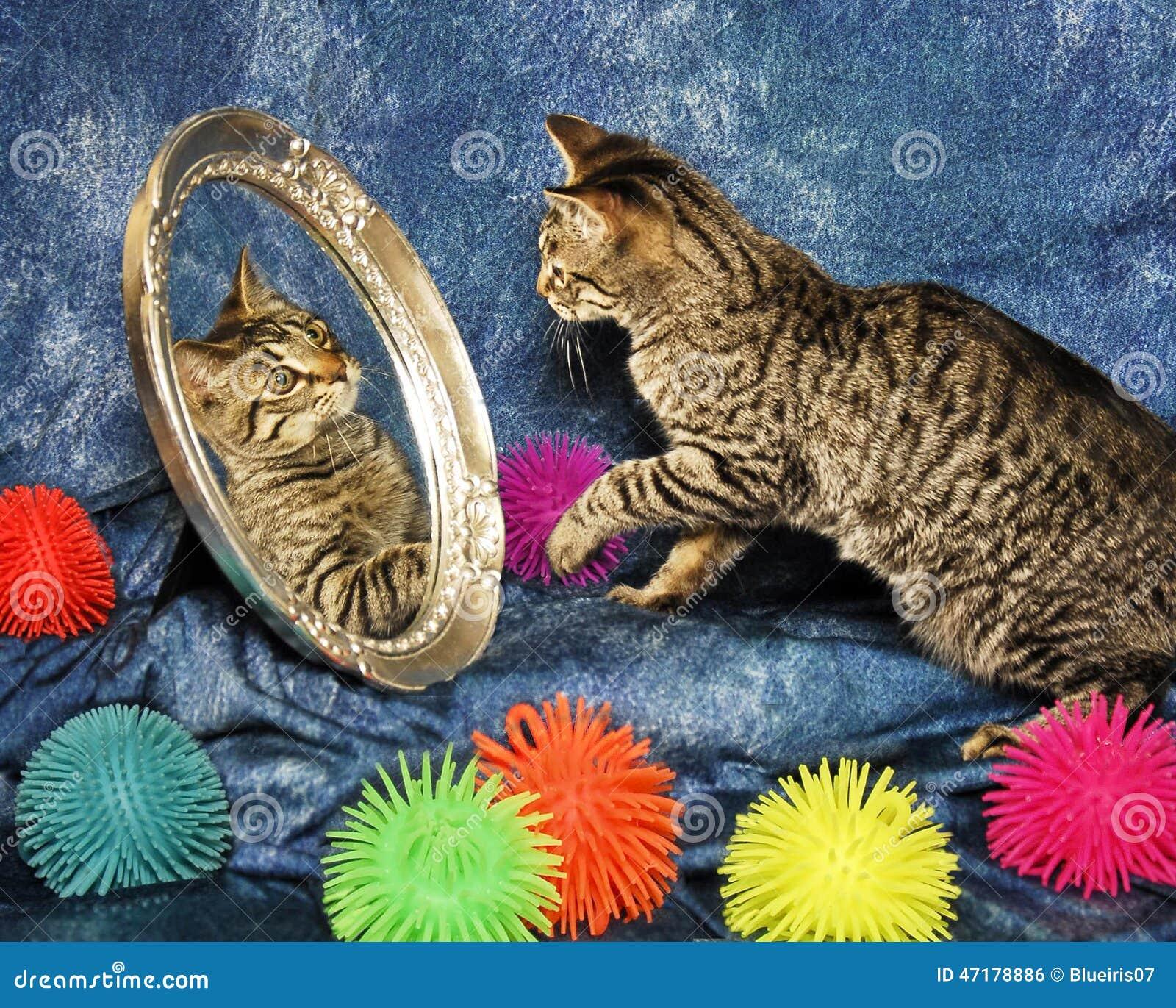 Kitten In A Mirror Stock Photo Image 47178886