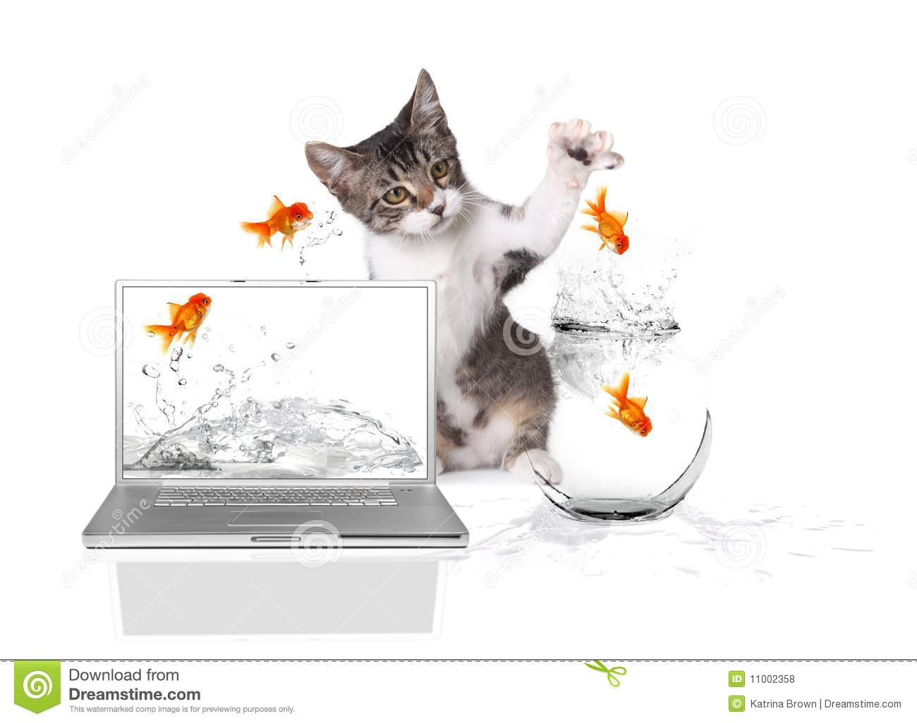 Kitten pawing at gold fish jumping out of water royalty for Dream about fish out of water