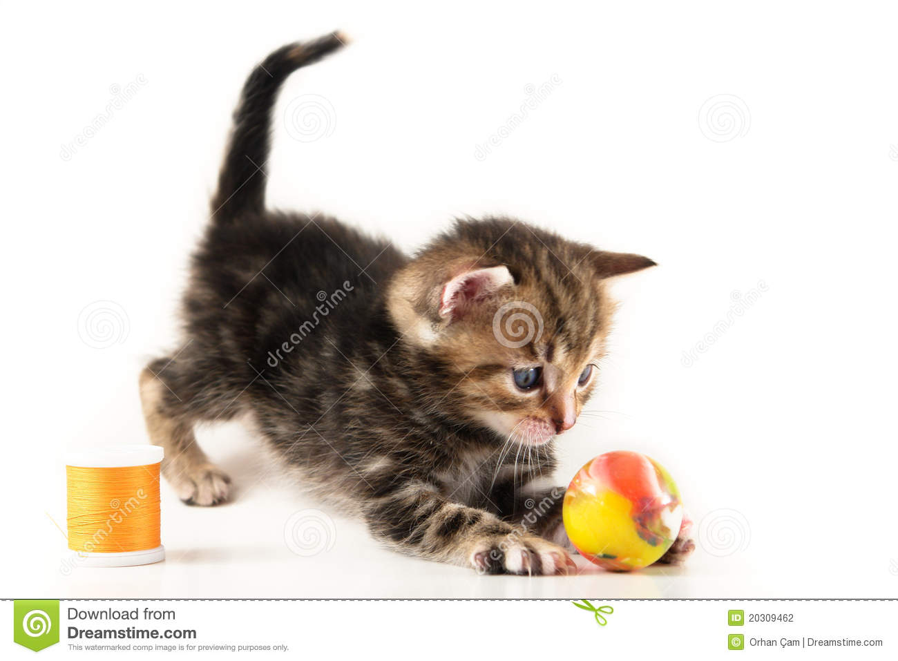 how to play with kittens