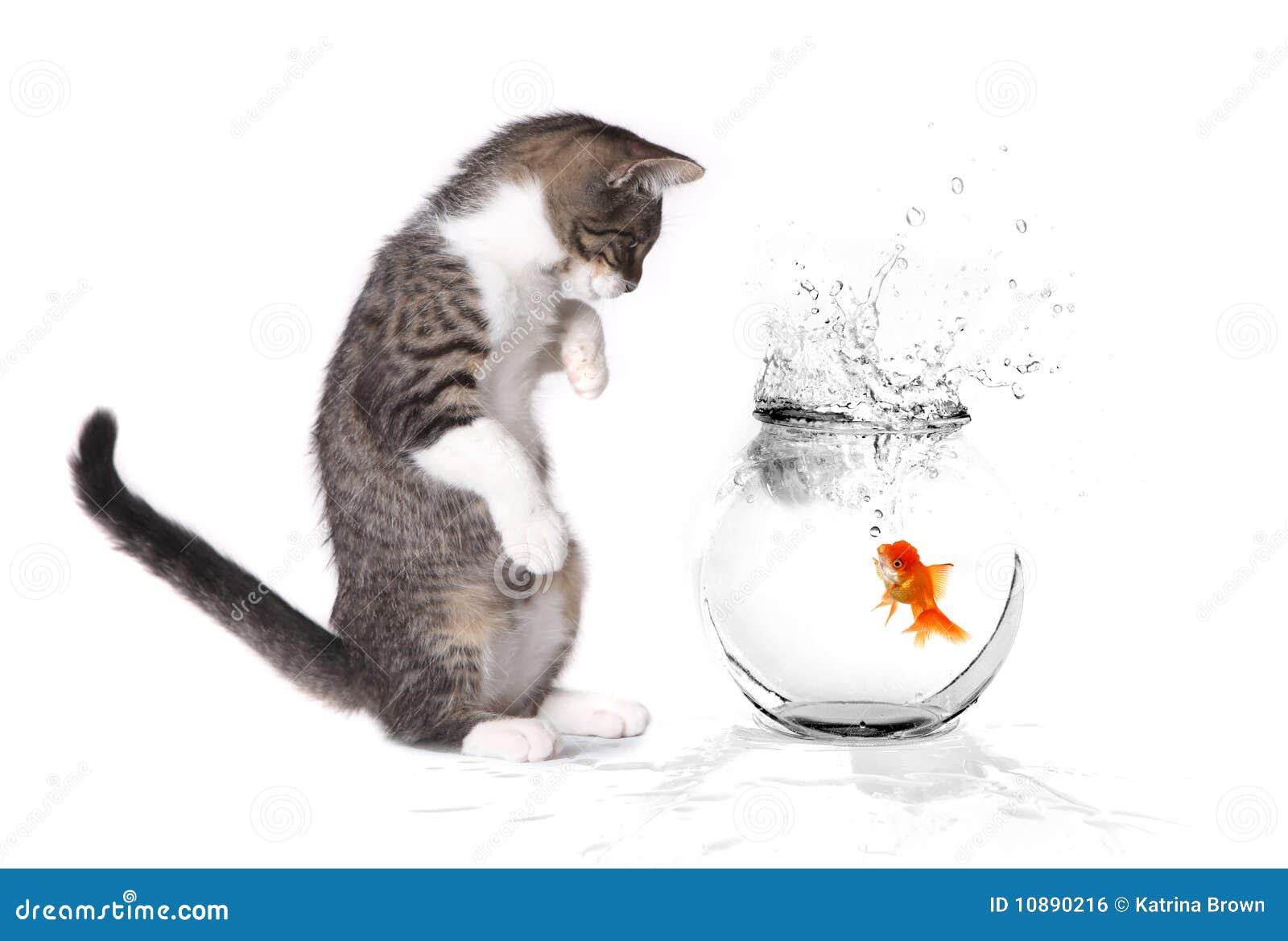playing goldfish