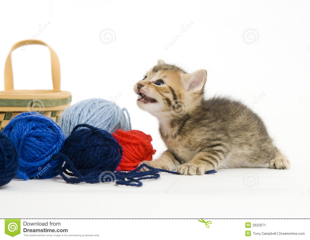 Kitten Playing With Yarn Stock Image - Image: 2622671