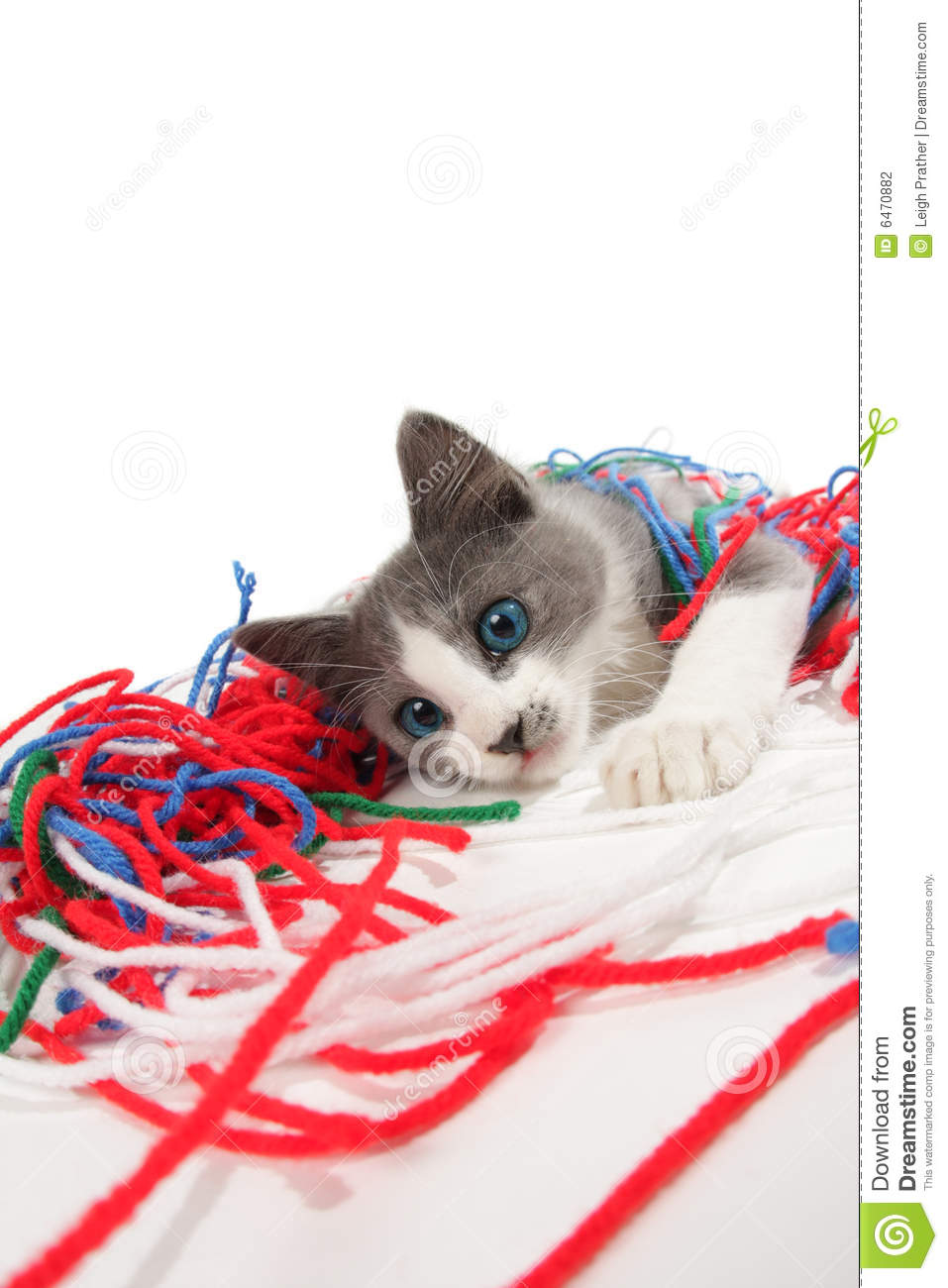 Kitten Playing With Yarn Stock Photography - Image: 6470882