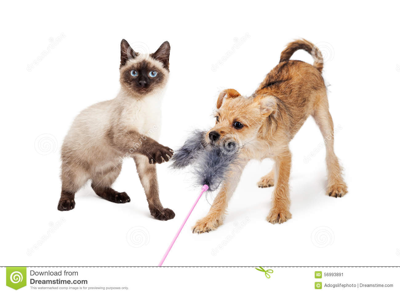 Kitten And Puppy Playing With Feather Toy Stock Photo ...