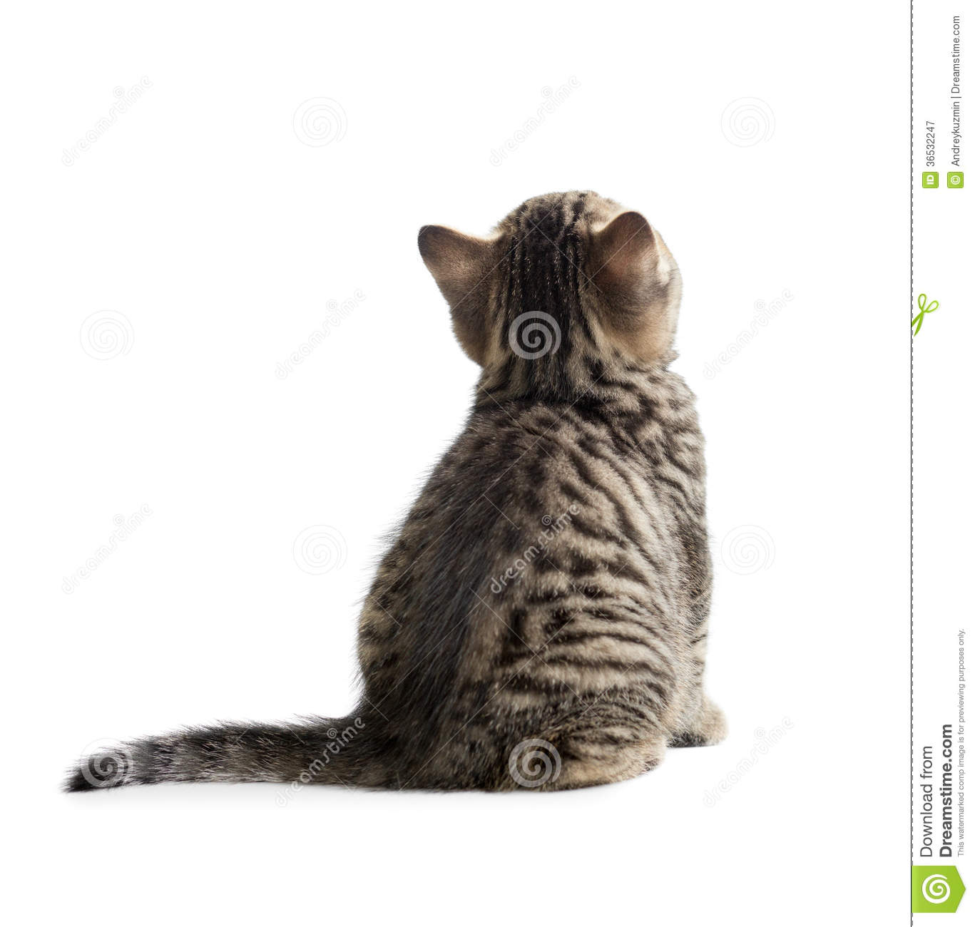 Clipart Cat Walking From The Back