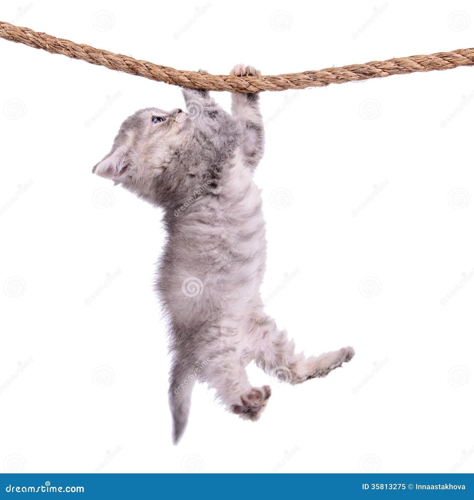 Фото держись котенок #10
