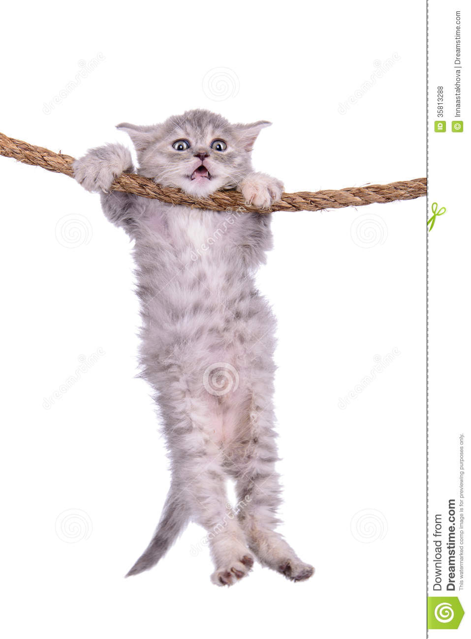 Free Cat Hanging In There Clip Art