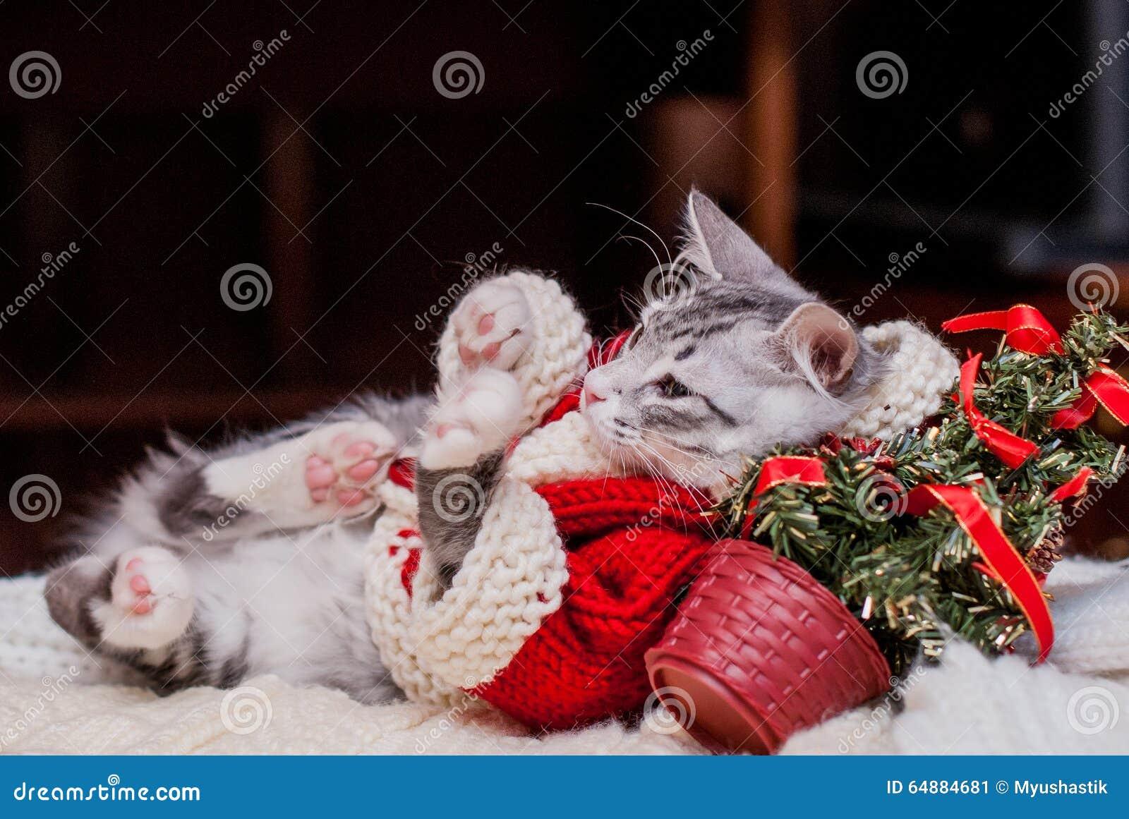 Kitten Santa Claus