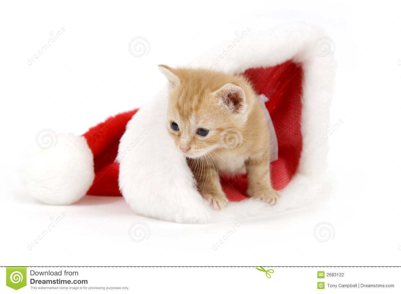 Kitten In A Santa Hat Stock Photo Image Of Holiday