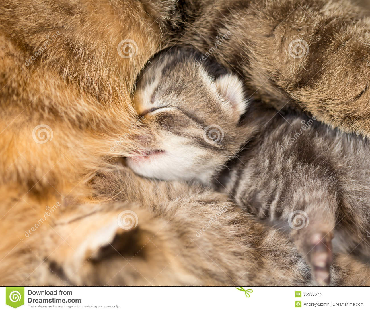 Mother Cat Sounds To Kittens